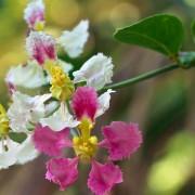 capa-flor-mariri-augusto-pessoa