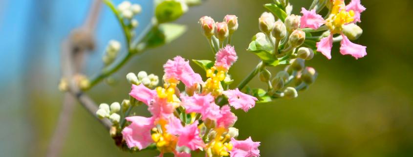 mariri-florando