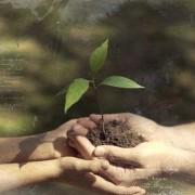 capa-youtube-plantio-udv