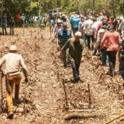 Plantadores cortada
